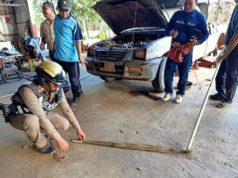 เช้าวันหวยออก สดๆ ร้อนๆ งูเห่าบุกอู่ซ่อมรถเขมือบคางคก ก่อนเลื้อยไปซ่อนตัวในรถกระบะ