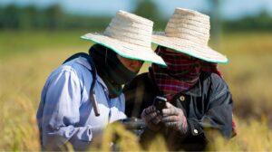 ตรวจสอบสิทธิ์ 'เยียวยาเกษตรกร'